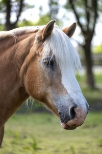 Dag van het paard. 7 november