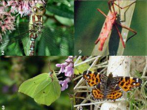 Jeugdclub: Thema sloot en insecten. 21 mei